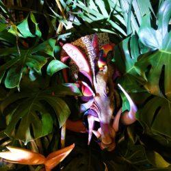 Boruca Rain Forest (7)