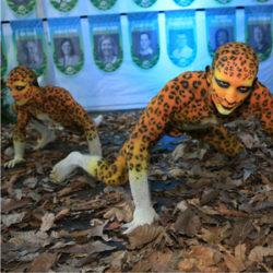 raintforest-ligera-05